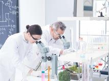 Analyse de laboratoire sous le microscope Images stock