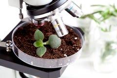 Analyse der Bodenprobe mit Jungpflanze unter Mikroskop stockbild