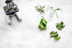 Analyse du concept de nourriture Produits sains Herbes romarin, menthe sous le microscope sur l'espace gris de vue supérieure de  photographie stock libre de droits