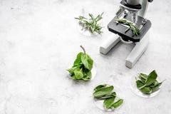 Analyse du concept de nourriture Produits sains Herbes romarin, menthe sous le microscope sur l'espace gris de vue supérieure de  photo stock