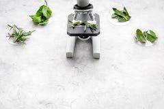 Analyse du concept de nourriture Produits sains Herbes romarin, menthe sous le microscope sur l'espace gris de vue supérieure de  photos libres de droits