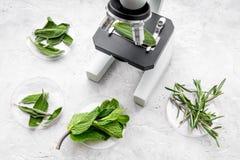 Analyse du concept de nourriture Produits sains Herbes romarin, menthe sous le microscope sur la vue supérieure de fond gris photo libre de droits