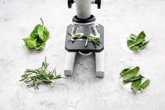 Analyse du concept de nourriture Produits sains Herbes romarin, menthe sous le microscope sur la vue supérieure de fond gris photographie stock