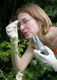 analysering av den nya växten Arkivbild