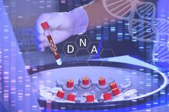 Analysis of dnk. A hand in a medical glove holds a test tube wit stock photos