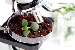 Analysis of soil sample with young plant under microscope. In laboratory close up stock image