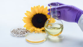 Analysis of sunflower oil in laboratory Stock Image
