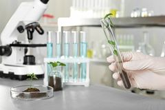 Analyst holding test tube with sprout royalty free stock photos