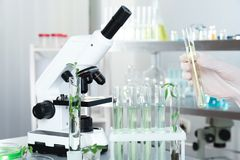 Analyst with test tubes doing chemical analysis. In laboratory, closeup royalty free stock image