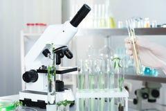 Analytiker med provrör som gör kemisk analys royaltyfri bild