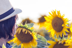 Analyzes whether the sunflower yield will be good Royalty Free Stock Image