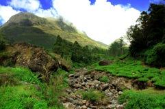 Anamudi, и плантация чая стоковое изображение rf