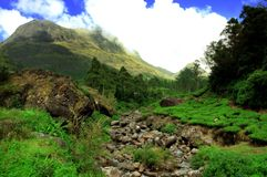 Anamudi, and Tea Plantation. Anamudi is located in the Indian state Kerala. It is the highest peak in the Western Ghats and South India, at an elevation of 2,695 Royalty Free Stock Image