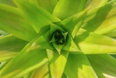 Ananas Royalty-vrije Stock Afbeeldingen