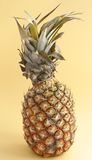 Ananas. Tropical fruit ripe ananas on beige background Stock Photography