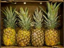 Ananas Image libre de droits