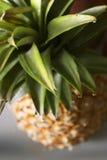 Ananas photos stock