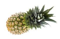 ananas Fotografering för Bildbyråer
