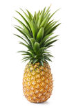 Ananas Photo stock