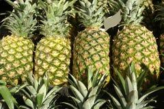 ananas Fotografie Stock Libere da Diritti