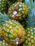 Ananas Stockbild