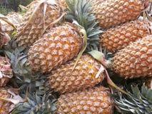 Ananas Stock Afbeeldingen