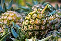 Ananas Royalty-vrije Stock Foto's