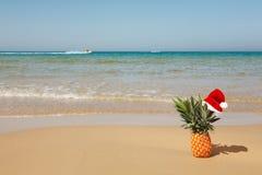Ananas al cappello della Santa. Immagine Stock Libera da Diritti