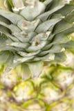 Ananas - alto vicino Immagini Stock Libere da Diritti