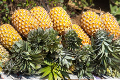 Ananas au marché indien Photos libres de droits