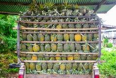 Ananas auf dem LKW Stockfotografie