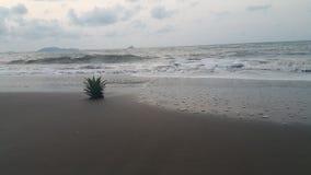 Ananas auf dem Strand Lizenzfreies Stockfoto