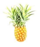 Ananas auf Isolat Stockfoto