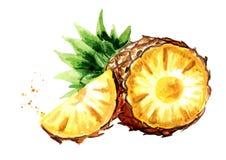 Ananas avec la tranche Illustration tirée par la main d'aquarelle, d'isolement sur le backgroundÑŽ blanc Image libre de droits