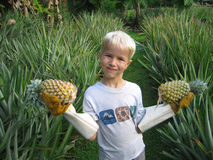Ananas chiunque? Immagini Stock