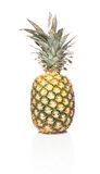 Ananas comosus Royalty Free Stock Images