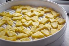 Ananas coupé dans un dessiccateur de déshydrateur, plan rapproché Vue de ci-avant images libres de droits