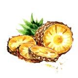 Ananas coupé en tranches Illustration tirée par la main d'aquarelle, d'isolement sur le fond blanc Image libre de droits