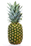 Ananas d'isolement Images stock