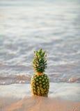 Ananas dans le sable sur la plage Image stock