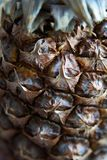 Ananas de plan rapproché, ananas photographie stock libre de droits