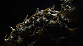 Ananas in der Rotation stock video footage