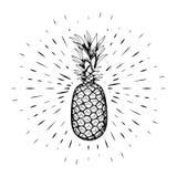 Ananas, dessiné à la main, contour noir dans la perspective des rayons linéaires calligraphie Pour la conception des affiches, ba Photo stock
