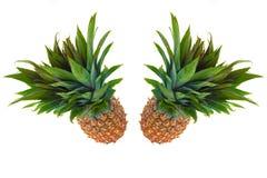 Ananas due contro una priorità bassa bianca Immagine Stock