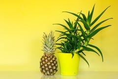Ananas ed aloe Immagine Stock