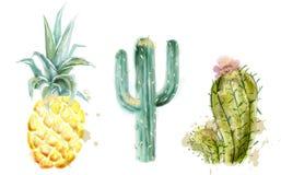 Ananas en cactus vastgestelde Vectorwaterverf Exotische tropische inzameling geschilderde stijlen vector illustratie