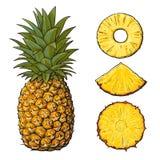 Ananas entier et tranches - épluchés, non épluché, cale, illustration de vecteur Photo stock