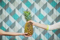 Ananas femelle de prise de deux mains ensemble Photographie stock