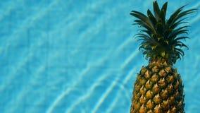Ananas flottant dans l'eau bleue dans la piscine Aliment biologique cru sain Fruit juteux Fond tropical exotique clips vidéos