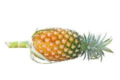 Ananas frais d'isolement, Asie image libre de droits